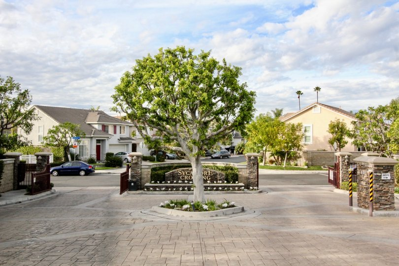 Sycamore Crossing Building have Beautiful Tree at Orange City in Califorina