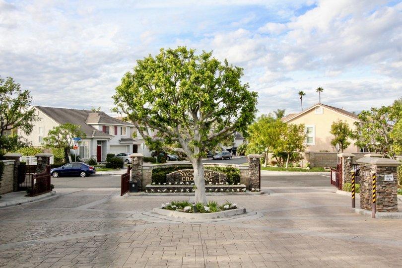 Sycamore Crossing Building have Beautiful Tree at Orange City in Califorina