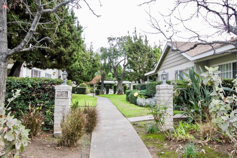 Clean sidewalk leads to a grassy yard woit trees and houses in the Californian community.