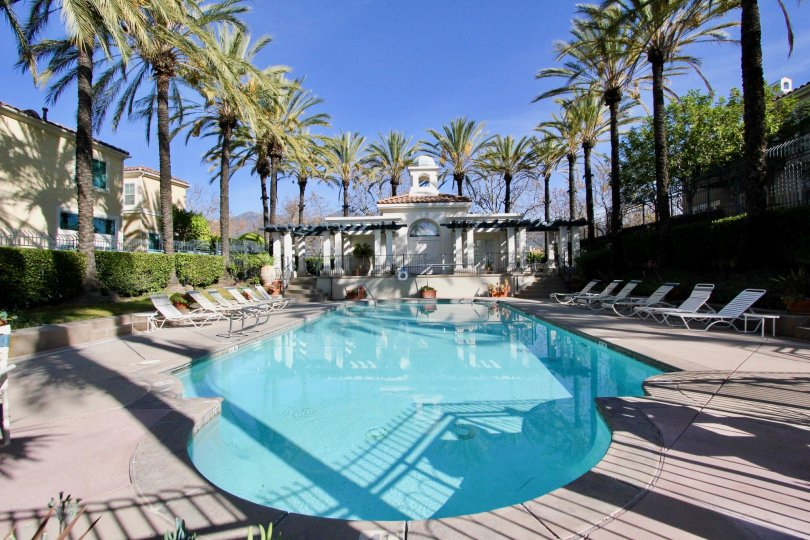 Beautiful palm trees line the patio of the pool at Cierra Del Lago