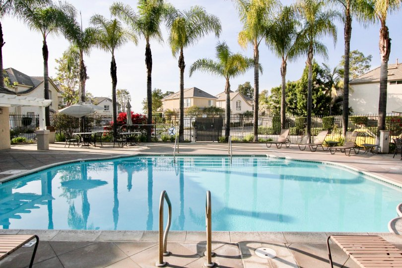 Fabulous looking swimming pool with palm trees and sitting near Magnolia of Rancho Santa Margarita