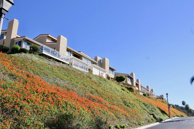 Lush hillside landscaping at the Seaview Townhomes