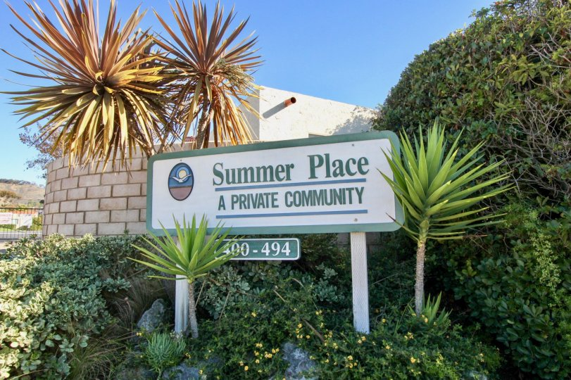 the summer place is the palm tree of san clemente city in california