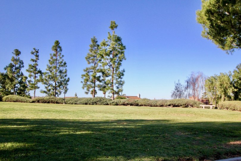 A green rolling lawn with tall trees in the background on a sunny day in Loma Vista area of San Juan Capistrano, CA