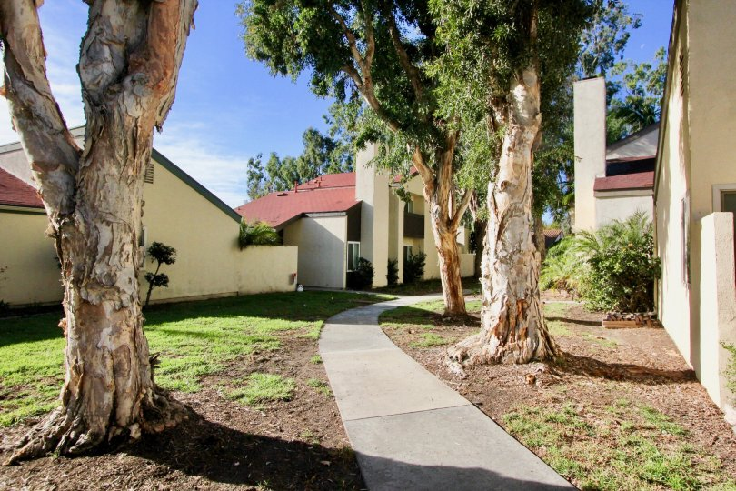 Trees and sidewalk at Sun Hollow in San Juan Capistrano, CA