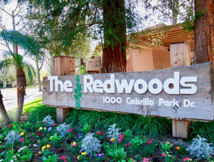 A clear day in the Redwoods in front of the sign with trees.
