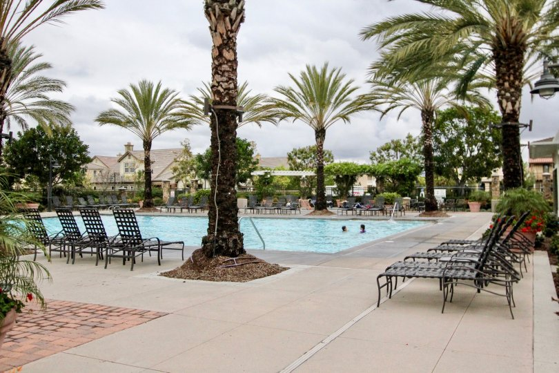 Attractive California palms surround pool and recreational amenities at the Ainsley Park