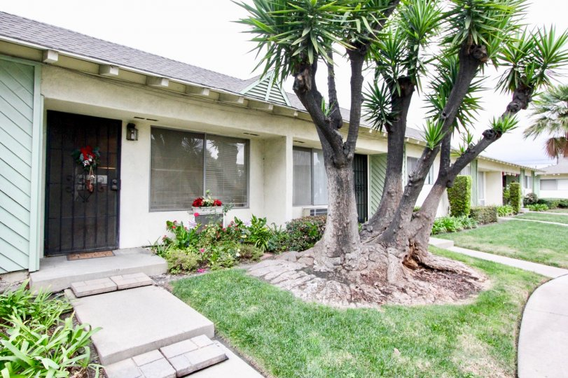 Bungalow style attached units with medium size front lawns with mature trees and garden plots in Tustin