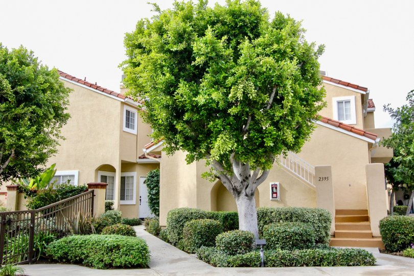 a tree in front of a building in Estancia community, Tustin, CA