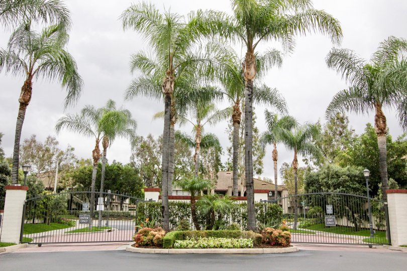 An overcast day by the Miramonte entrance with Palm trees and other various plants and bushes scattered about as well as light poles positioned as so behind the gate
