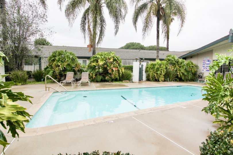 Beautiful Swimming pool with palm trees around in Palmwood Gardens of Tustin
