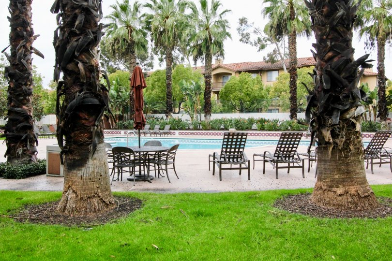 The poolside view at Tustin Del Verde with pool chairs, covered picnic seating, tall palm trees and green grass common areas
