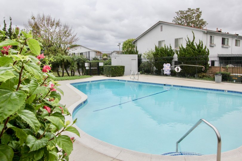 Nice looking swimming pool with flowers and garden near villa of Tustin Imperial of Tustin