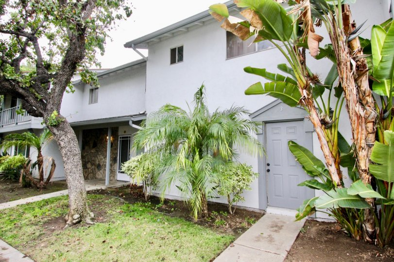 THE HOME IN THE TUSTIN IMPERIAL WITH THE BANANA TREES, PLANTS, GRASSES