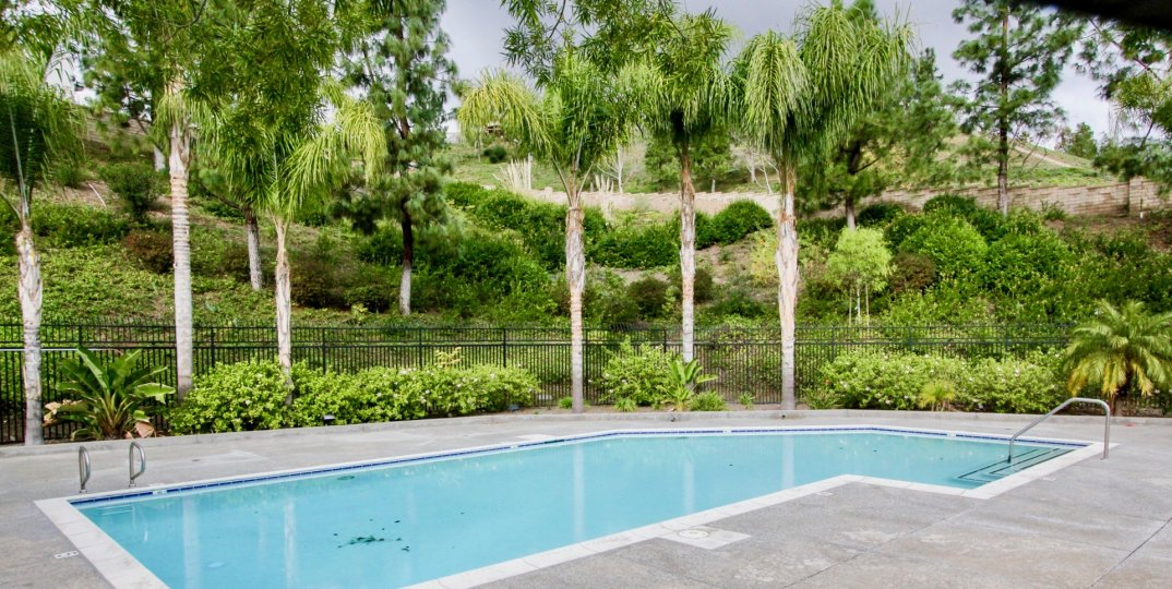 Around the swimming pool has lawn with tall trees and bushes in La Terraza II