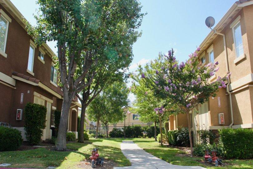 A sunny neighbourhood in Murrieta California showing townhouses