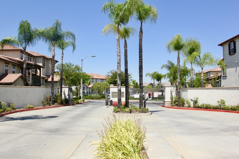 Bright sunny day in Murrieta, California with tall palm trees