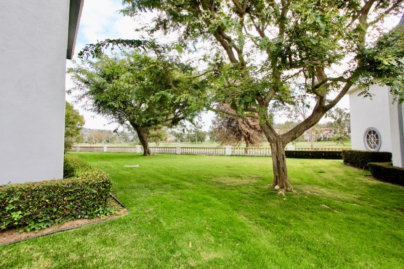 THE PICNIC PLACE IN THE JOCKEY CLUB WITH THE GRASSLAND, TREES, HOUSE, PLANTS