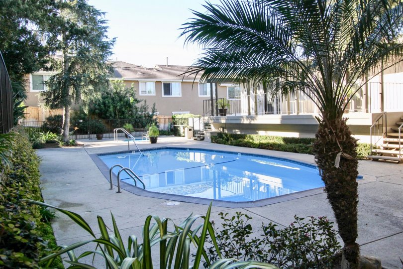 Fabulous swimming pool with palmtrees between villas in La Costa Fairways of Carlsbad