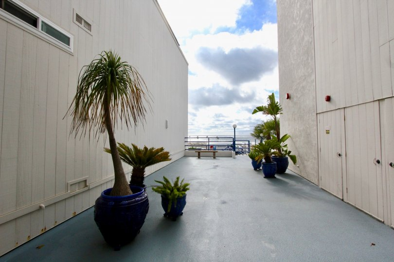 An assortment of potted desert plants between two large buildings in Llewellyn Shores in Carlsbad CA