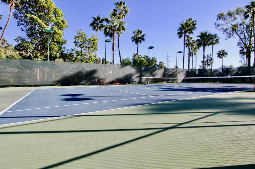 A great sunny day in the Sea Point Tennis Club with a tennis court and trees.