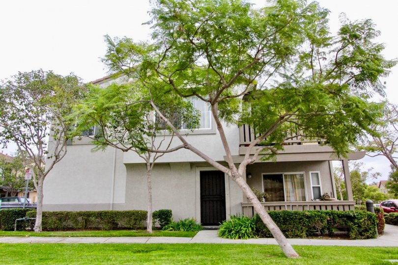 Beautiful House in Carlsbad, California obstructed by a tree in the front yard.
