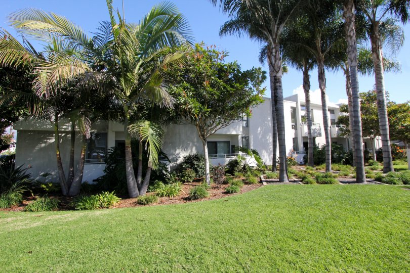 Fabulous view of Green Lawn and palm trees near villas in South Park of Carlsbad
