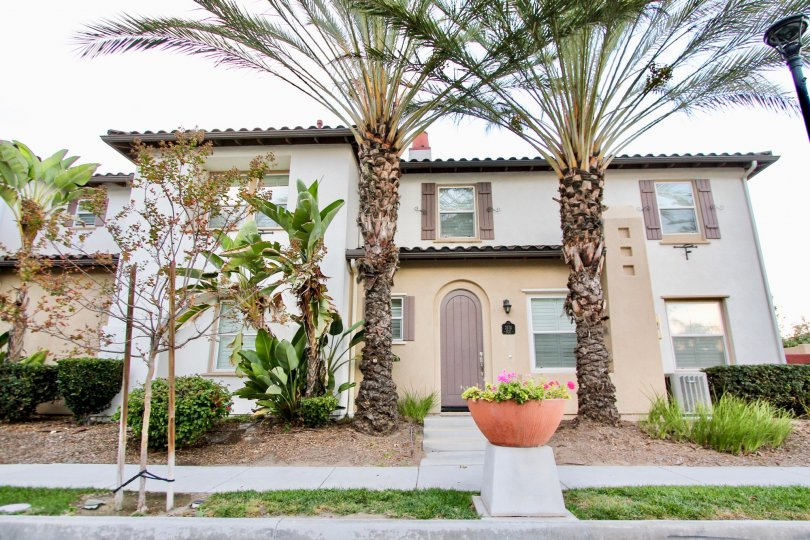 Palm trees stand tall in front of a house in the Agave community of Chula Vista, CA.