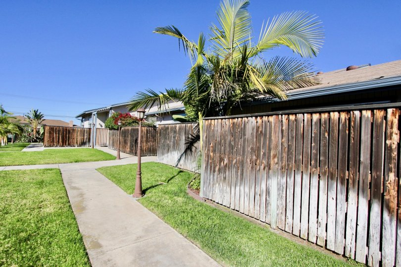 A sunny day along at the intersection of three concrete walkways in front of a fence and a palm tree.
