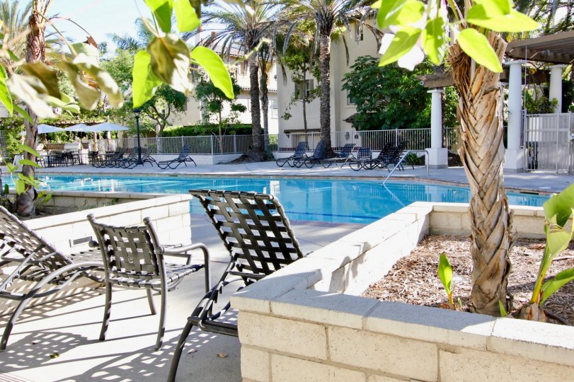 THE APARTMENT IN THE SAGUARO WITH THE SWIMMING POOL, CHAIRS, BANANA TREES