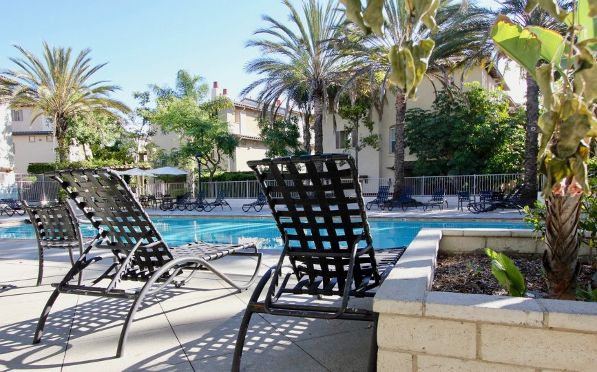Large palm trees and black lounge chairs surround a large pool at the Saguaro community of Chula Vista, California.