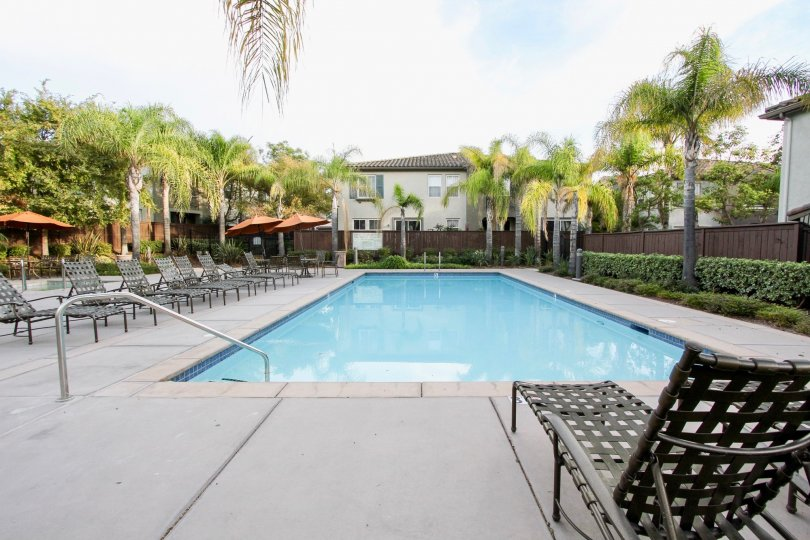 Sunny day in front of pool with chairs, Trees & Fences, Chula Vista, CA