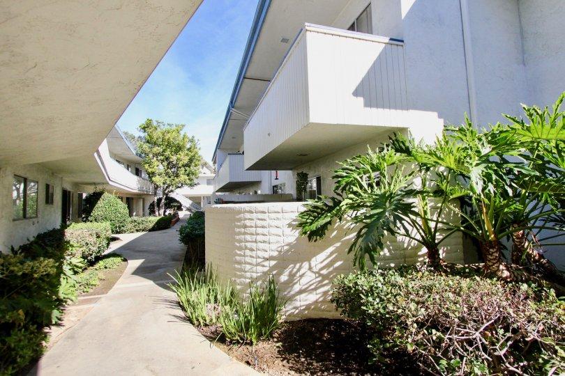 : Bayview Terrace ,Clairemont Mesa,California,blue sky, pathway