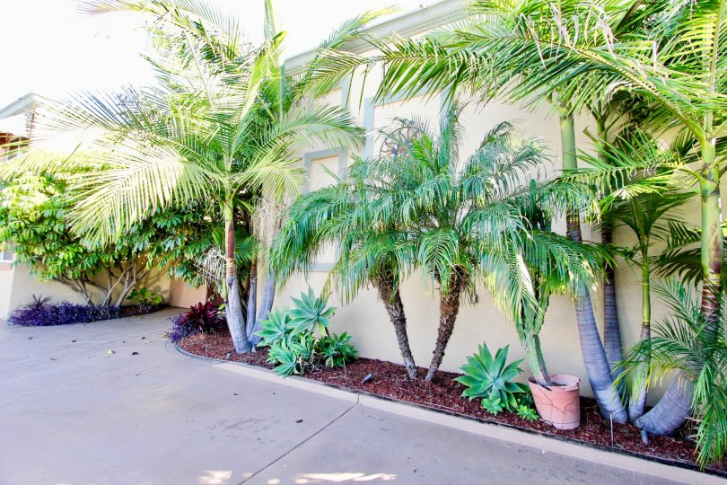 Casa Del Sol , College Area , California,trees,potted plant