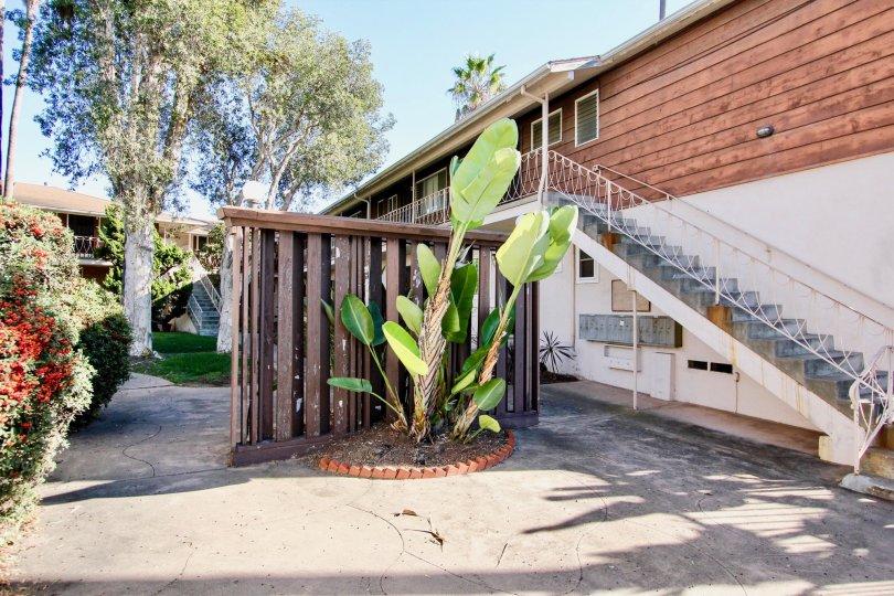 College Gardens  ,: College Area , California  ,steps,plantain tree