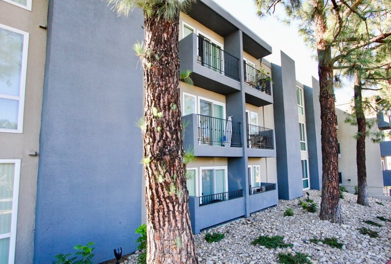 Three story residential building next to pine trees at Tuscany Place in College Area California