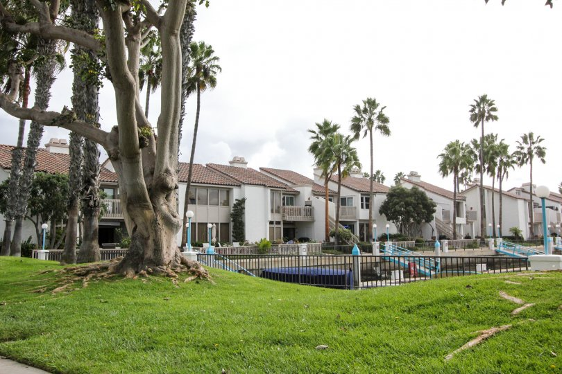 Lawn, palm trees and homes in Coronado Cays, Coronado CA
