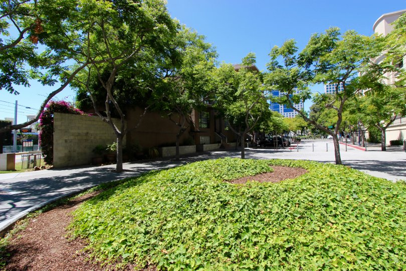The Brickyard Condos Downtown San Diego California view of small round hill with fox ivy and sidewalk with trees growing inside the concrete