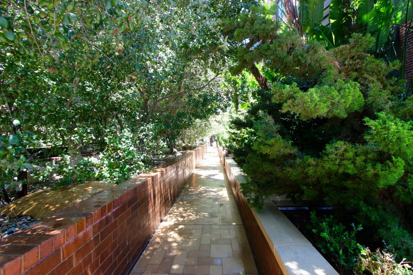 Lush green walkway at Cityfront Terrace in Downtown San Diego, CA