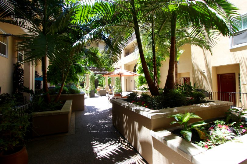Beautiful palm tree landscaping offers shade in the courtyard of Citywalk.