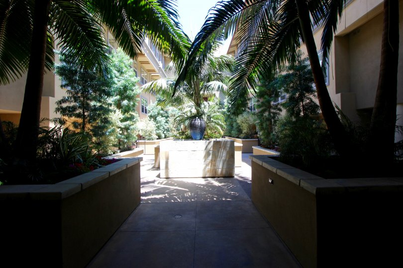 A radiant and sunny morning at the Citywalk with a view of its tropical forest-like interiors with exceptional trees and plants and peaceful shady areas
