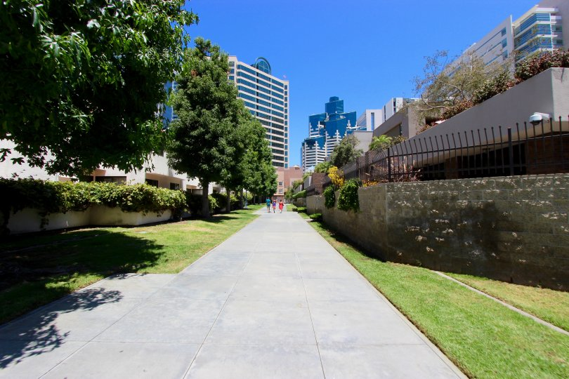 An alley with trees leading to tall buildings in Marina Park