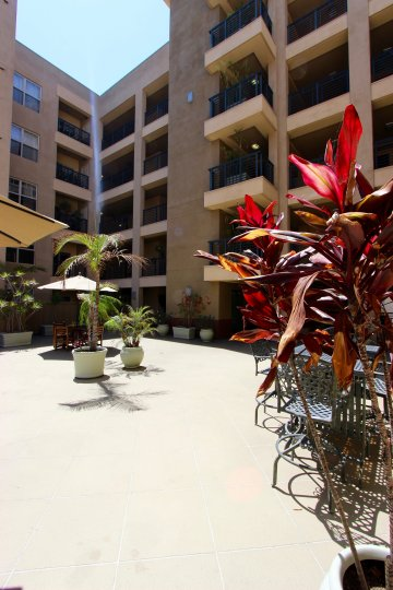 A red tropical plant sits on a patio at Pacific Terrace