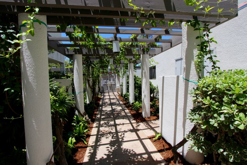 A shaded pergola walkway with vines in Park Row community in Downtown San Diego California