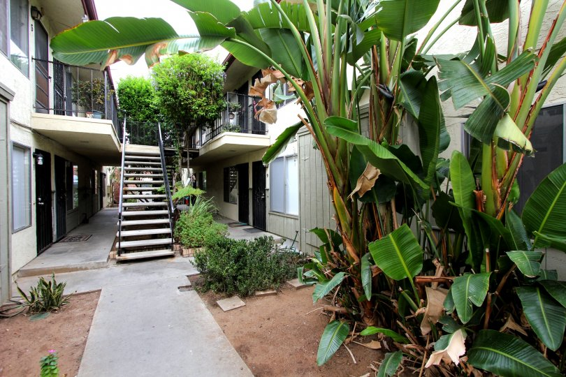 A WONDERFUL HOME COVERED WITH BEAUTIFUL TREES AND BANANA TREES