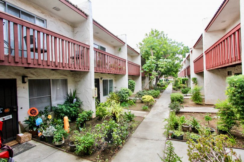apartments, homes, garden, trees, plants, bright, sky, flowers