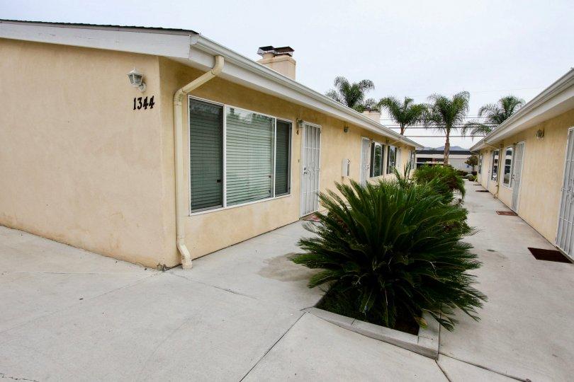 apartments, homes, sidewalk, cement, concrete, plam trees, plants, bushes
