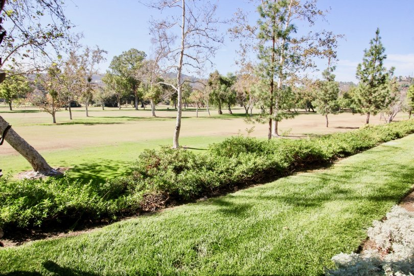 Large park with trees and grass at Fairway Villas in El Cajon California