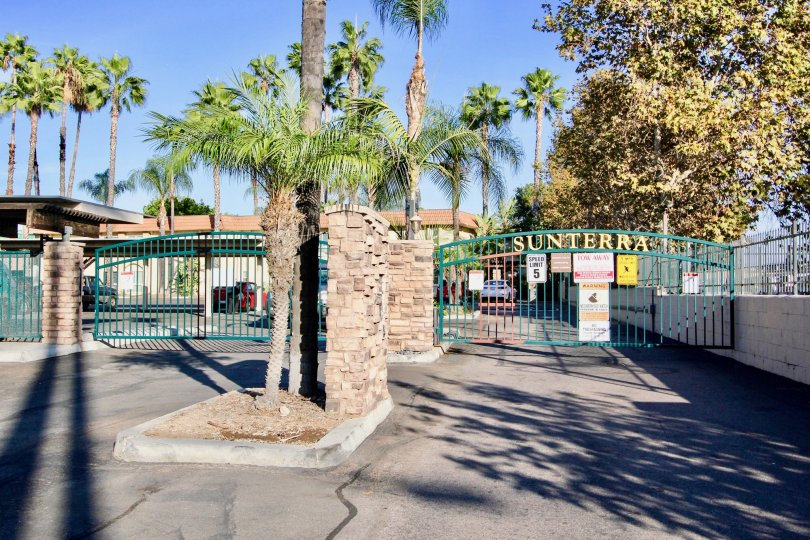 Entrance gate view with huge palm trees backdrop of Sunterra.