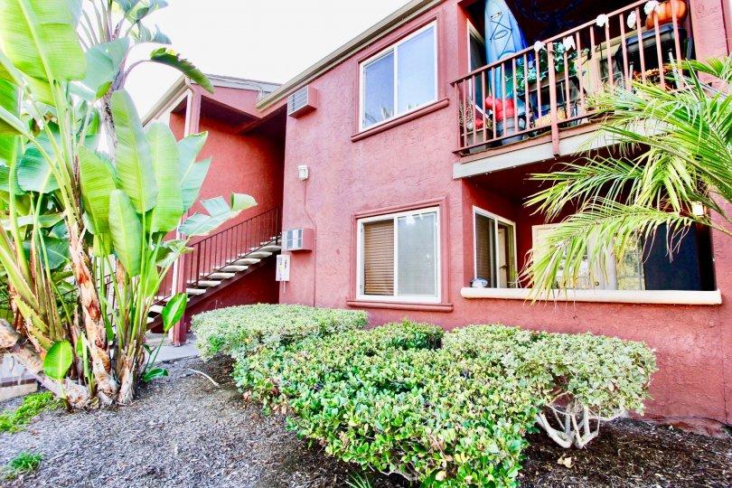 A banana tree in the Vista Del Sol giving apartment good vibrant environment.